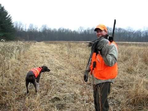 Pheasant Hunt, Hook on point.