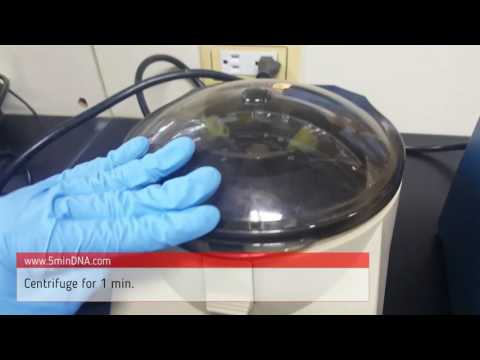 5 minutes blood DNA extraction
