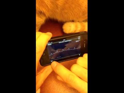 iPhone ECG and heart disease in cats.