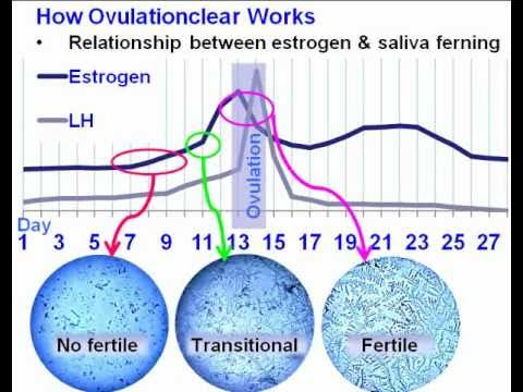 How To Get Pregnant Fast & Naturally Are You Trying To Conceive?