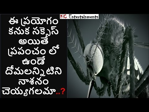 Can we kill all Mosquitoes with this new technology? in Telugu   KC Entertainments