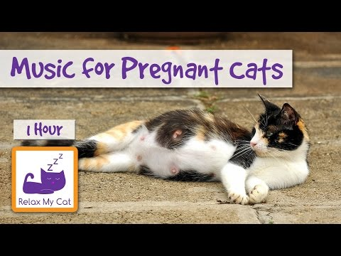 Music for Pregnant Cats, Help them Give Birth to Kittens Peacefully 🐱 #PREGNANT02