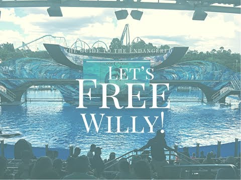 Vlog 1 - Let's Free Willy!