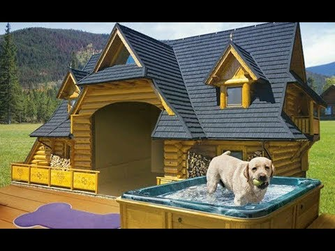 How To Build a Dog House | Quick and Easy DIY