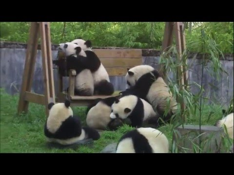 League of Angels II: Save Pandas