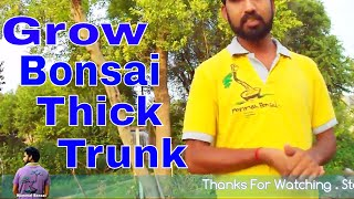 बोन्साई का तना मोटा कैसे करे /How to Grow Bonsai Thick Trunk-11th July 2017/Mammal Bonsai