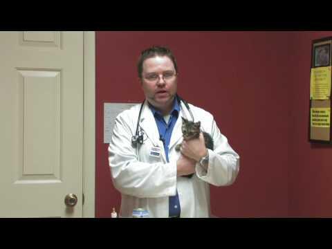 Kitten Care : What Can Kittens Eat?