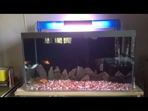 cheap aquascaping .... black stone.....pebbles....gold and black sharks