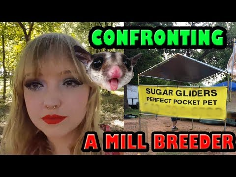 CONFRONTING A SugarGlider Mill Breeder - Educating With Flyers & Finesse!