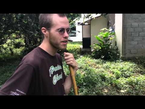 Chonta Palm: South America Tropical Plants