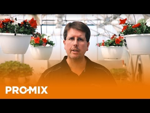 What Is The Role of Calcium in Plant Culture