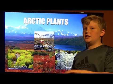 Cason Sheppard 5th Grade Project Arctic Tundra Biome