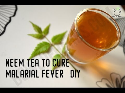 How To Make Neem Tea To Cure Malaria - Remedy | Bowl Of Herbs