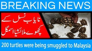 200 turtles were being smuggled to Malaysia | 15 Sep 2018 | 92NewsHD