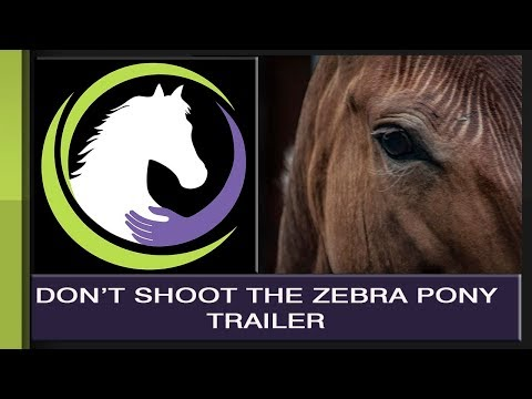Don't Shoot the Zebra Pony TRAILER