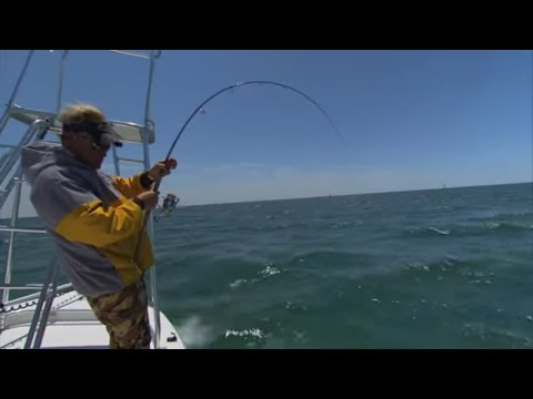 DOA Swimming Mullet Fishing for Cobia in Destin Florida