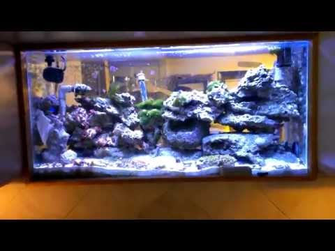 Saltwater tank built into kitchen wall