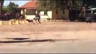Mystery Half-Dog Half-Human Creature Filmed In Limpopo, South Africa