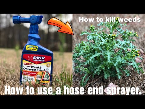How to use a hose end sprayer and how to kill weeds