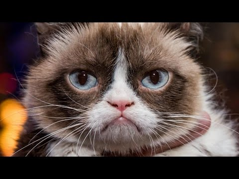Grumpy Cat Cashes In on His Internet Fame