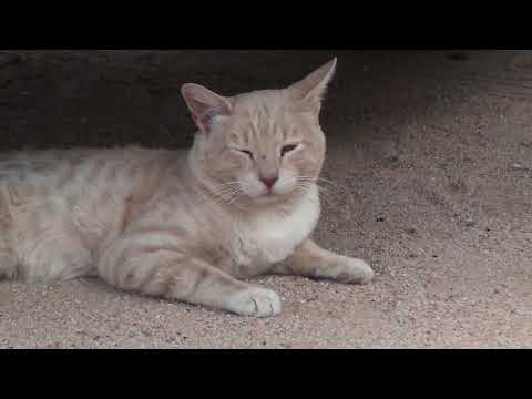 How do I tell if a stray cat is sick?
