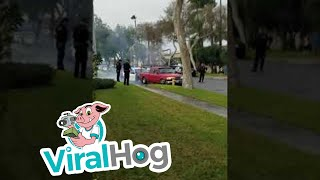 Download Driver Arrested After Crashing into Palm Tree, Fire Hydrant || ViralHog Video