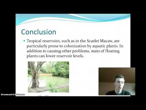 Water Pollution Conclusion - UF 300