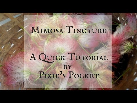 Making a Mimosa Flower Tincture