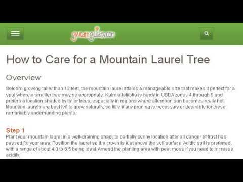 How-To Plant A Texas Mountain Laurel Tree