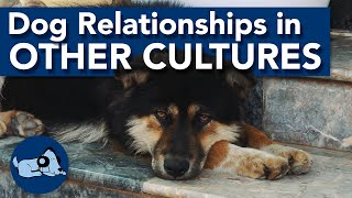 The Relationship with Dogs in Different Cultures!