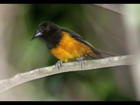 Montserrat - wildlife and heritage