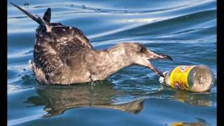 """""""The Effects of Plastic Pollution"""" – Madison H. Winning Video – May 2016"""