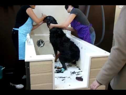 Muddy Paws Dog Wash