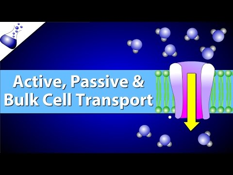 Active, Passive, and Bulk Cell Transport