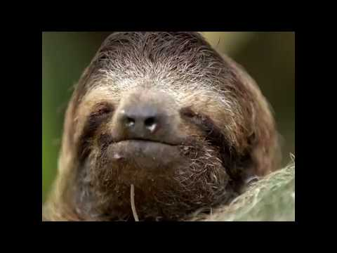 5 things you didn't know about sloths