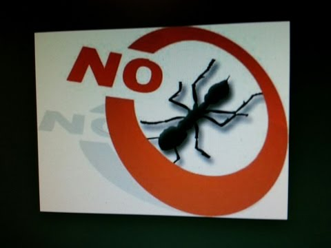 Kill Those Ants and other Bugs