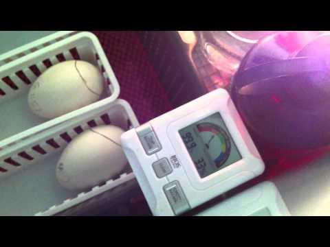 Homemade incubator (Ducks & Geese)