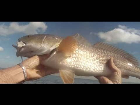 Trout and Redfish Wade Fishing in Tampa Bay