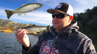 Fishing Giant Baits For Giant Bass  | Tylersreelfishing