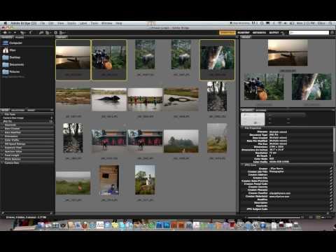 PDF tutorial for the Adobe Bridge