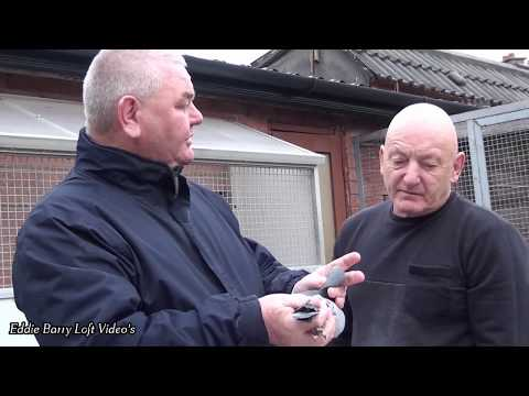 Jos Rielly Pre Auction Video for Blackpool January 2018
