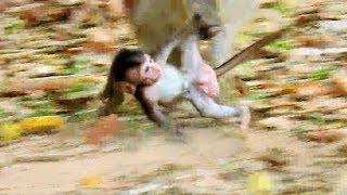 Omg!, Pity Baby Monkey Gino, Why Kidnapper Run Drgging Gino Like This? Gino Cry Call Mom.