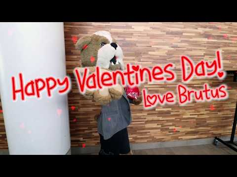 Happy Valentine's Day from Brutus | V Day 2020 | Valentine's Day 2020 | How to be a Valentine