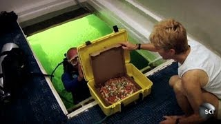 Scuba-Diving Pizza Delivery Man   World