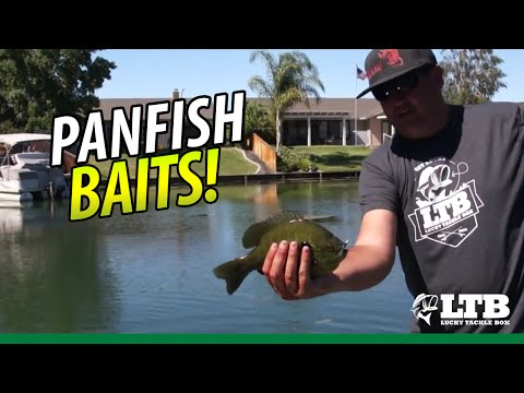Best Baits to Catch Panfish | Lucky Tackle Box