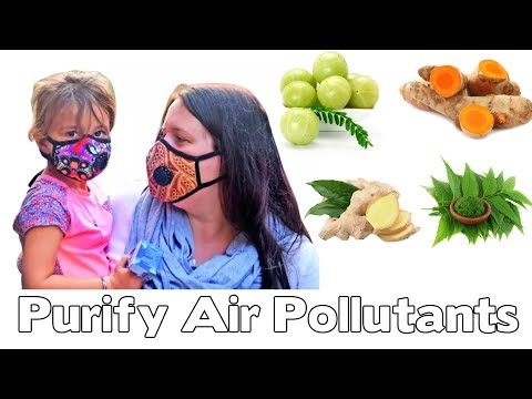 Herbs To Purify Your Body From Air Pollutants