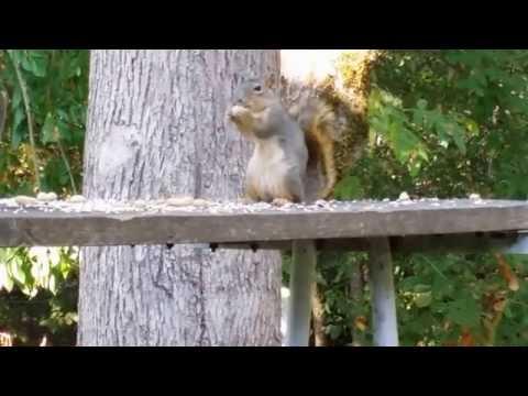 Funny Squirrel in Eugene, Oregon.