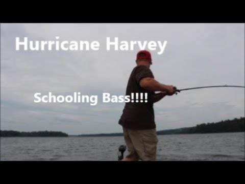 Catching Schooling Bass During A Hurricane!!!