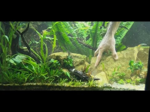 How to Design an Aquarium, working with the aquarium plants...