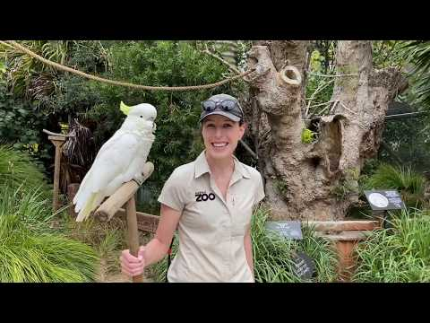 Cockatoo Captain takes a tour of Auckland Zoo!